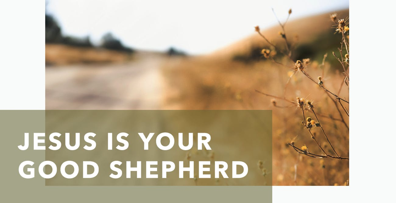 Joseph Prince Daily Devotional 24 August 2020 - Jesus Is Your Good Shepherd